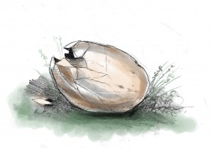 Egg hatching after being hit by lightning